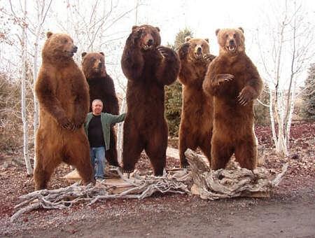 Bears_Standing.jpg