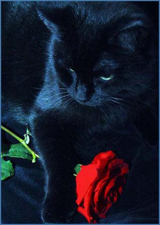 Hidden Secrets,Death clan Warrior cats arise from the shadows.... Black_Rose_CatML
