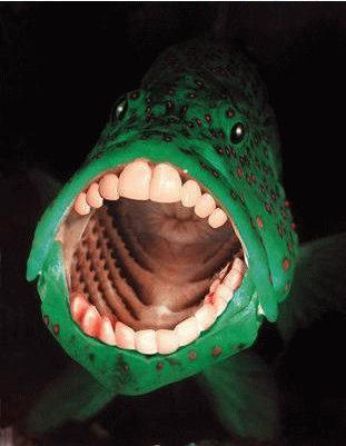Fish with Human Teeth: A strange sighting along the Texas ...