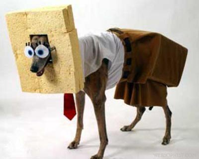 Fashion  Clothes on If You Make Your Dog Wear Clothes  Please Don T Do This  Pic  Lol