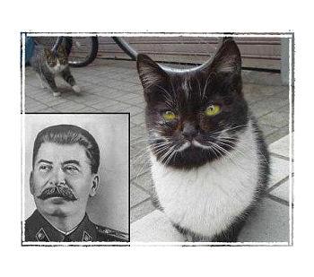 Stalin_Cat_FrameM.jpg